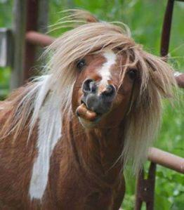Marshmallow_horse