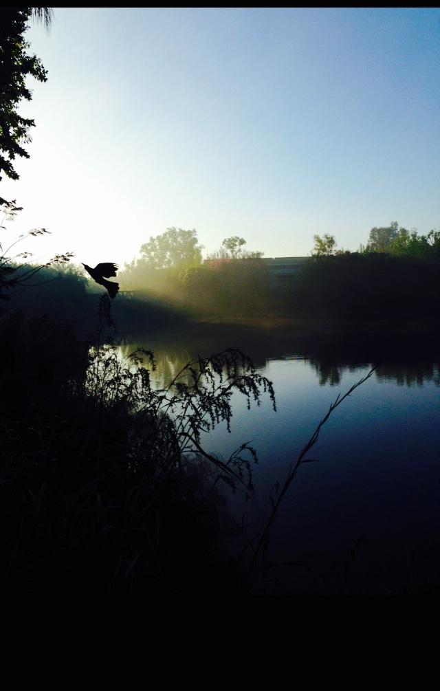 3_bird-over-water